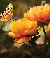 Butterfly hovering over vibrant flowers.